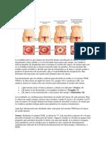 Propagación CA de Cervix