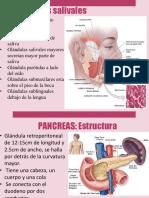 intestino grueso.pptx