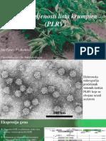 Potato Leaf Roll Virus Ispravljeno (6)