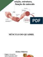 cinesio músculos