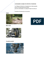 Animales de Extincion en Guatemala