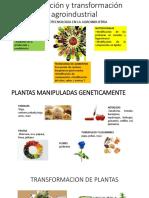 Produccion y Transformacion Agroindustrial