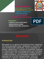 MORAXELLA-DIAPOSITIVAS-3