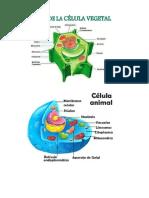 tipos de celulass.docx
