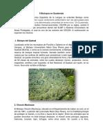 6 Biotopos en Guatemala