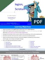 NA Inguinal and Scrotum