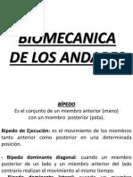 Biomecanica de Los Andares