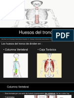 Huesos Del Tronco