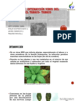 Mosaico Del Virus Del Tabaco