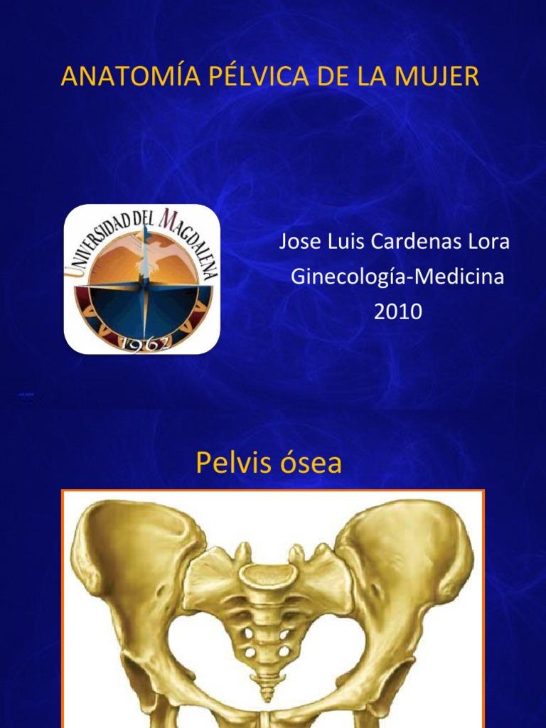 Bonito Anatomía Pélvica Cresta - Imágenes de Anatomía Humana ...