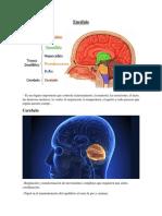 El éncefalo, la neurona y los neurotransmisores