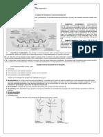 guia_2 _sistnerv_tercero.pdf