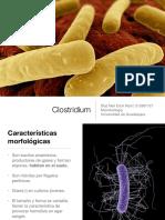 Clostridium Microbiología