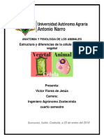 Celula Animal vs Celula Vegetal