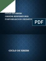 12 Ciclo de Krebs, Fosforilacion Oxidativa, Cadna Respiratoria
