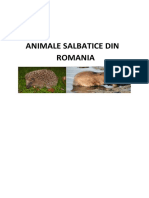 Animale Salbatice Din Romania