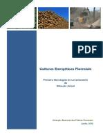 culturas energeticas florestais.pdf