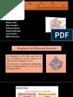 NMD3 CODIFICA UNA PROTEÍNA ESENCIAL ya REQUERIDA PARA 2 a