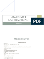 Anatomy I Lab Practical I Review