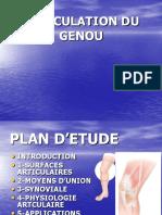 Anatomie-Articulation Du Genou