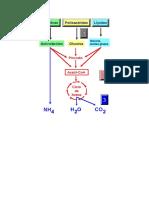 ciclos metabólicos.doc