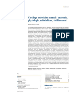 Cartilage Articulaire Normal