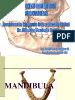 Fractura Mandibular Examen 1231744406192838 2