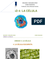 Orgánulos célula eucariota