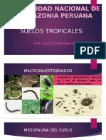 MACROFAUNA EDAFICA DEL SUELO QUINTANA -2017.pptx