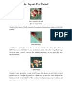 Soft Brown Scale - Organic Pest Control