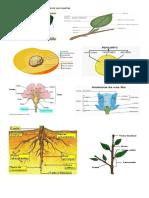 Partes de Los Principales Órganos de Las Plantas