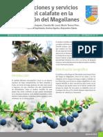 B. microphylla.pdf