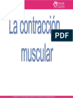 Contraccion Muscular Converted