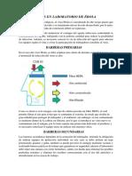 MEDIDAS EN LABORATORIO DE ÉBOLA.docx