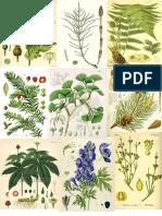Botanica, tavole piante