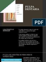 Pulpa dentaria