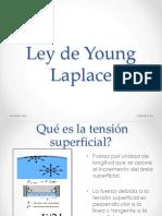 Young Laplace Condori