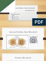 Anatomi Struktur Akar Monokotil