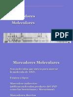 Marcadores Moleculares General 2018