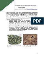 Liquid Immiscibility in Kimberlite Magma