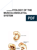 162563_Embryology of Musculoskeletal System