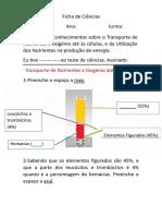 Ficha de Ciencias Transporte de Nutrientes e Oxigc3a9nio Atc3a9 c3a0s Cc3a9lulas