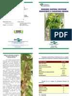 Folder Banana Caipira Cultivar Resistente
