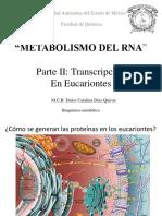 11.-Transcripción Eucariotes, Maduración MRNA