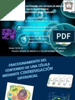 CENTRIFUGACION DIFERENCIAL CELULAR.pptx
