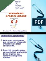 Presentación Anatomía UNAN Leon