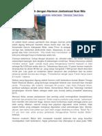 Untung Berlimpah Dengan Hormon Jantanisasi Ikan Nila