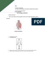 Anatomia Human1