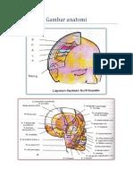 Gambar Anatomi Cranial 1