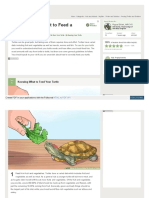 What to Feed a Turtle